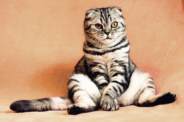 【有吉の壁】猫ダンスの振り付け動画はある?Tik Tokでも披露?