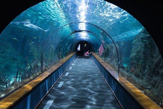 【嵐】三ツ矢サイダーのCMのロケ地である水族館はどこ?